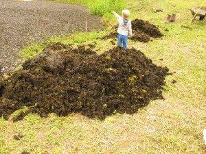 Theo coordenando os trabalhos de remoção das plantas e seu estoque na margem.